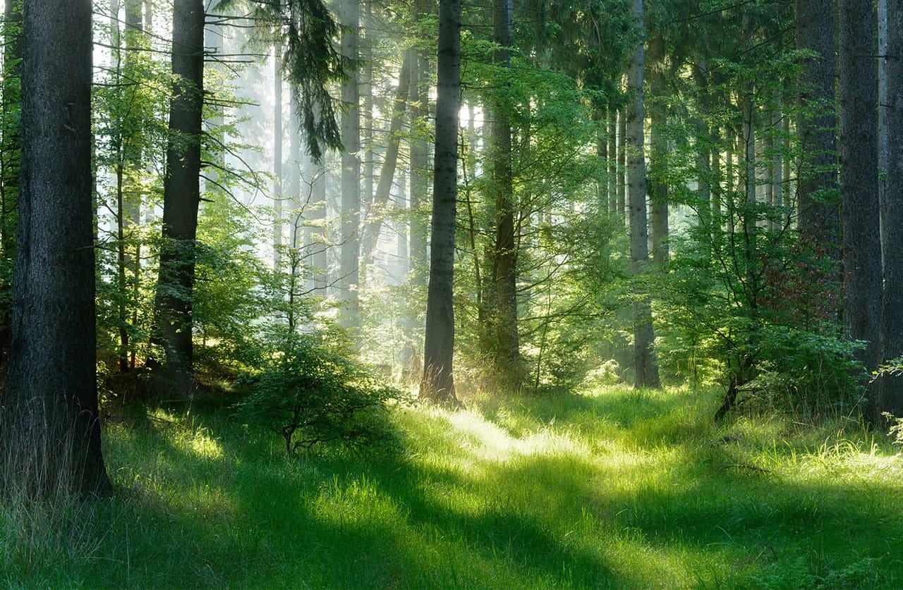 木を隠すなら森の中