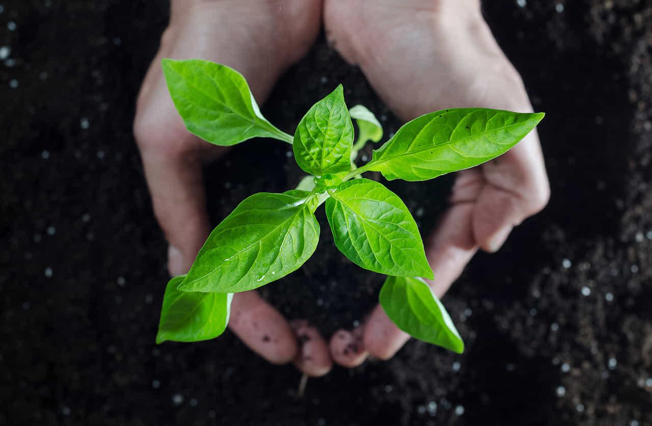 植物の苗を両手で包み込む女性