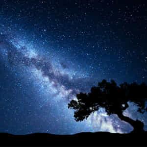 天の川を中心とした満天の星空と立派な木