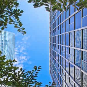 オフィスビルと街路樹を下から見上げる