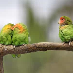 鳥が自分のパートナーが他の人といちゃついている様子を目撃している